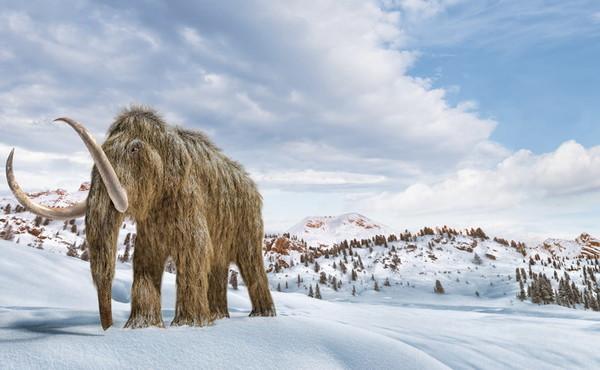 Mammut ricreati in laboratorio. Tutto vero: il piano russo, dettagli (e motivi) sconvolgenti
