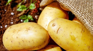 Poisonous potatoes, your fault: when you never eat them, panic at the ministry