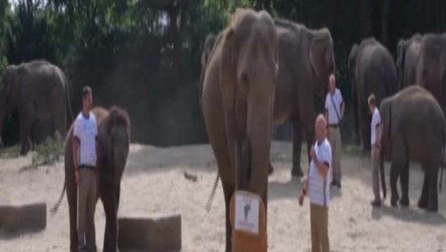 Euro 2020, l'elefante dello zoo di Amburgo fa sprofondare l'Inghilterra nel dramma