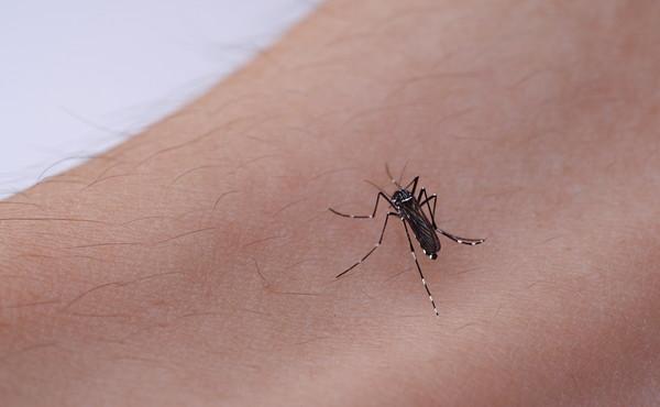 """Zanzare giapponesi, Italia invasa: """"Cosa si rischia con la puntura"""", conseguenze drammatiche"""