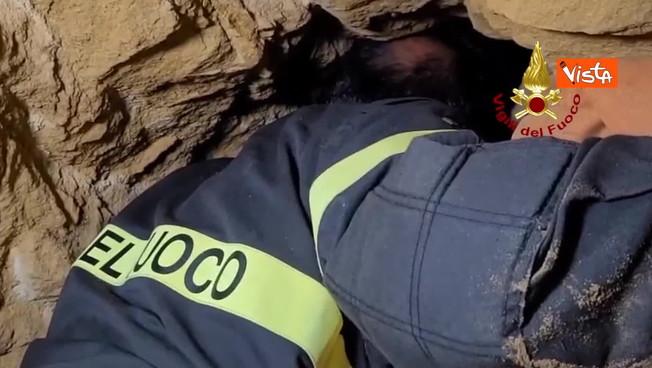 Palermo, cagnolino incastrato tra le rocce: 5 ore di calvario, il drammatico salvataggio